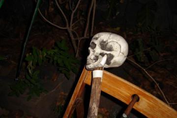 Gallery: Halloween 2008 halloween 08 000012 Finca Argayall (La Gomera)