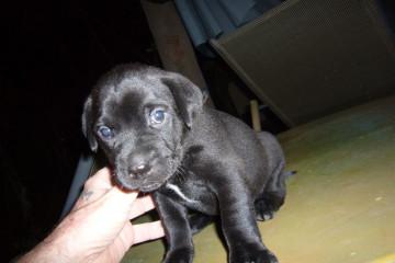 Gallery: Stella puppies stella puppies 2010 0003 Finca Argayall (La Gomera)
