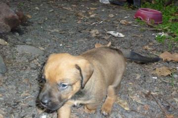 Gallery: Stella puppies stella puppies 2010 0014 Finca Argayall (La Gomera)