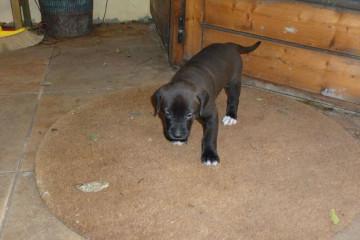 Gallery: Stella puppies stella puppies 2010 0019 Finca Argayall (La Gomera)