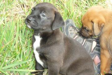 Gallery: Stella puppies stella puppies 2010 0023 Finca Argayall (La Gomera)