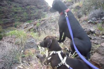 Gallery: Stella puppies stella puppies 2010 0037 1 Finca Argayall (La Gomera)