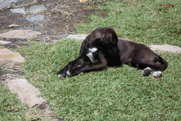 Gallery: Stella puppies stella puppies 2010 0041 1 Finca Argayall (La Gomera)