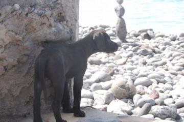 Gallery: Stella puppies stella puppies 2010 0053 1 Finca Argayall (La Gomera)