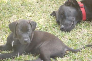 Gallery: Stella puppies stella puppies 2010 0054 1 Finca Argayall (La Gomera)