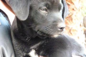 Gallery: Stella puppies stella puppies 2010 0064 1 Finca Argayall (La Gomera)