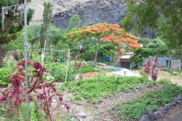 Gallery: Finca garden 2010 garden 2010 0006 1 Finca Argayall (La Gomera)