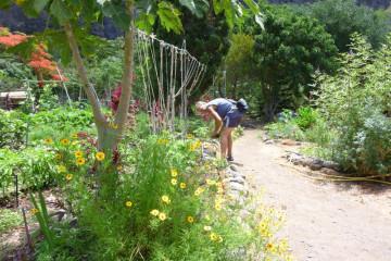 Gallery: Finca garden 2010 garden 2010 0009 1 Finca Argayall (La Gomera)
