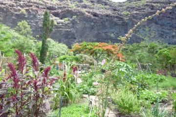 Gallery: Finca garden 2010 garden 2010 0010 1 Finca Argayall (La Gomera)