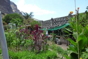 Gallery: Finca garden 2010 garden 2010 0012 1 Finca Argayall (La Gomera)