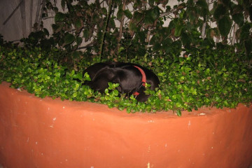 Galerie: Weihnachtszeit 2010 dezember 2010 0046 1 Finca Argayall (La Gomera)
