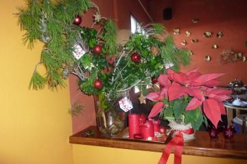 Galerie: Weihnachtszeit 2010 dezember 2010 0068 1 Finca Argayall (La Gomera)
