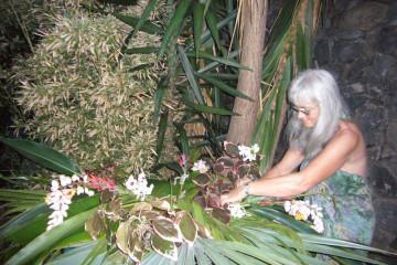 Gallery: Happy new year 2011 into 2011 0001 1 Finca Argayall (La Gomera)