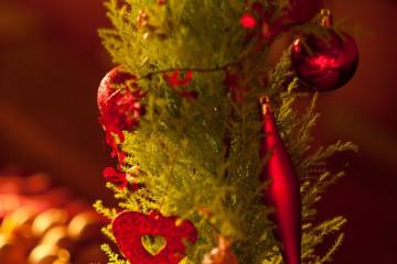 Weihnachten und Neujahr 2011 christmas and newyear 11 03 1 Finca Argayall (La Gomera)