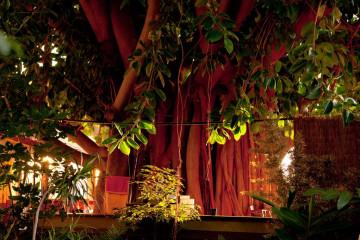 Weihnachten und Neujahr 2011 christmas and newyear 11 1 Finca Argayall (La Gomera)