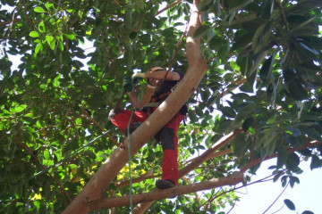 Galerie Gummibaum 2012 treecutting 12 03 1 Finca Argayall (La Gomera)