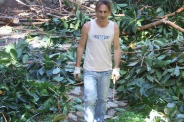 Galerie Gummibaum 2012 treecutting 12 04 1 Finca Argayall (La Gomera)