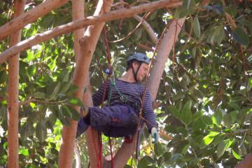 Galerie Gummibaum 2012 treecutting 12 07 1 Finca Argayall (La Gomera)