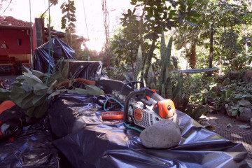 Gallery: Rubbertree 2012 treecutting 12 11 1 Finca Argayall (La Gomera)