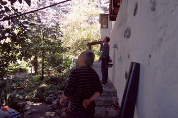 Gallery: Rubbertree 2012 treecutting 12 12 1 Finca Argayall (La Gomera)