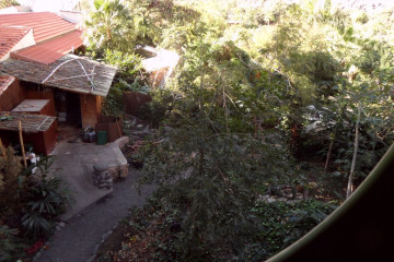 Gallery: Rubbertree 2012 treecutting 12 13 1 Finca Argayall (La Gomera)