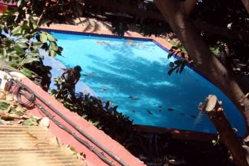Gallery: Rubbertree 2012 treecutting 12 16 1 Finca Argayall (La Gomera)