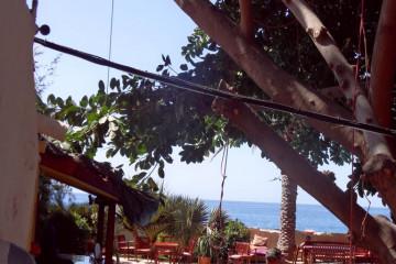 Galerie Gummibaum 2012 treecutting 12 17 1 Finca Argayall (La Gomera)