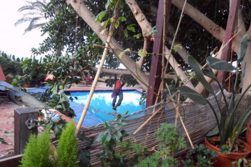 Galerie Gummibaum 2012 treecutting 12 22 1 Finca Argayall (La Gomera)