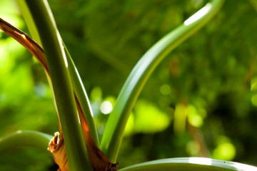 Gallery: Variety 2012 flowers 12 13 1 Finca Argayall (La Gomera)