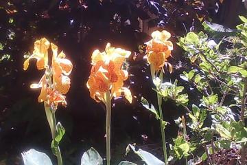 Fülle 2012 flowers 12 18 1 Finca Argayall (La Gomera)