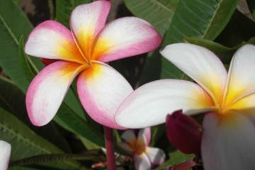 Gallery: Variety 2012 flowers 12 20 1 Finca Argayall (La Gomera)