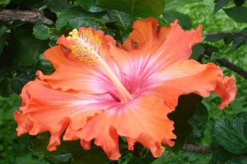 Fülle 2012 flowers 12 22 1 Finca Argayall (La Gomera)
