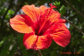 Fülle 2012 flowers 12 23 1 Finca Argayall (La Gomera)