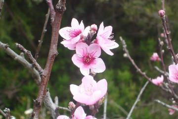Fülle 2012 flowers 12 24 1 Finca Argayall (La Gomera)