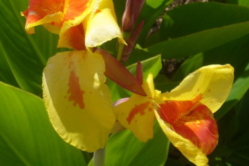 Fülle 2012 flowers 12 26 1 Finca Argayall (La Gomera)