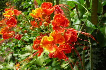 Fülle 2012 flowers 12 28 1 Finca Argayall (La Gomera)