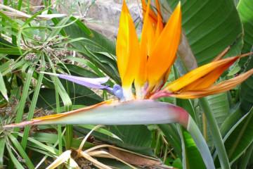 Fülle 2012 flowers 12 29 1 Finca Argayall (La Gomera)