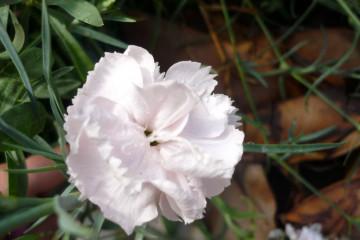 Fülle 2012 flowers 12 30 1 Finca Argayall (La Gomera)