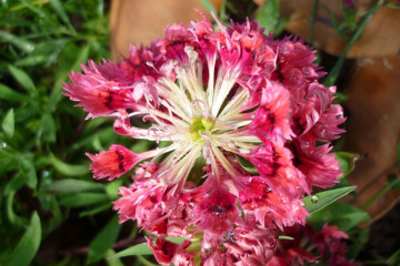 Gallery: Variety 2012 flowers 12 32 1 Finca Argayall (La Gomera)