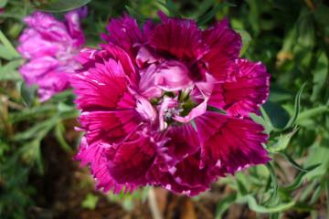 Fülle 2012 flowers 12 33 1 Finca Argayall (La Gomera)