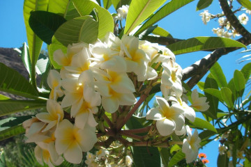 Galerie: Paradies flowers 12 37 1 Finca Argayall (La Gomera)
