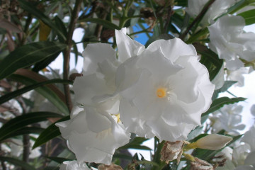 Fülle 2012 flowers 12 42 1 Finca Argayall (La Gomera)