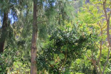 Holistische Körperarbeit 2 holistic 2  12 20 1 Finca Argayall (La Gomera)