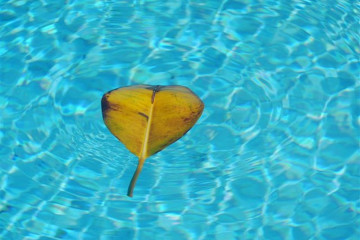 Pool Stillleben poolpics12 03 1 Finca Argayall (La Gomera)