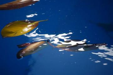 Pool Stillleben poolpics12 05 1 Finca Argayall (La Gomera)