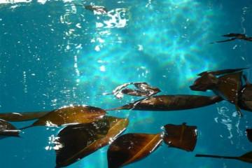 Pool Stillleben poolpics12 06 1 Finca Argayall (La Gomera)