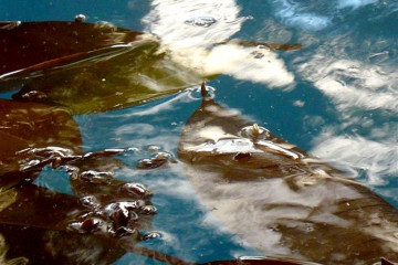 Pool Stillleben poolpics12 07 1 Finca Argayall (La Gomera)