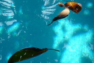 Pool Stillleben poolpics12 09 1 Finca Argayall (La Gomera)
