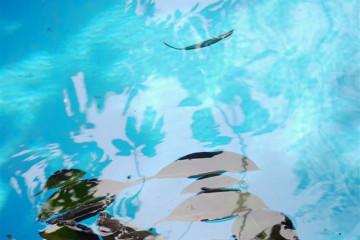 Pool Stillleben poolpics12 1 Finca Argayall (La Gomera)