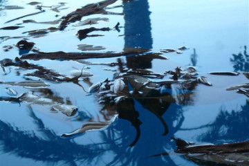 Pool Stillleben poolpics12 12 1 Finca Argayall (La Gomera)